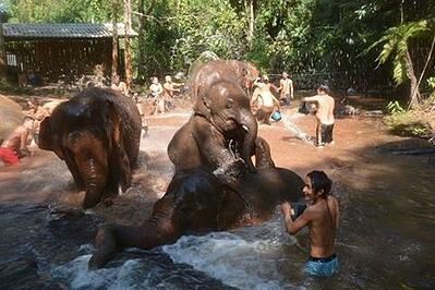 Exploring the elephants in Thailand