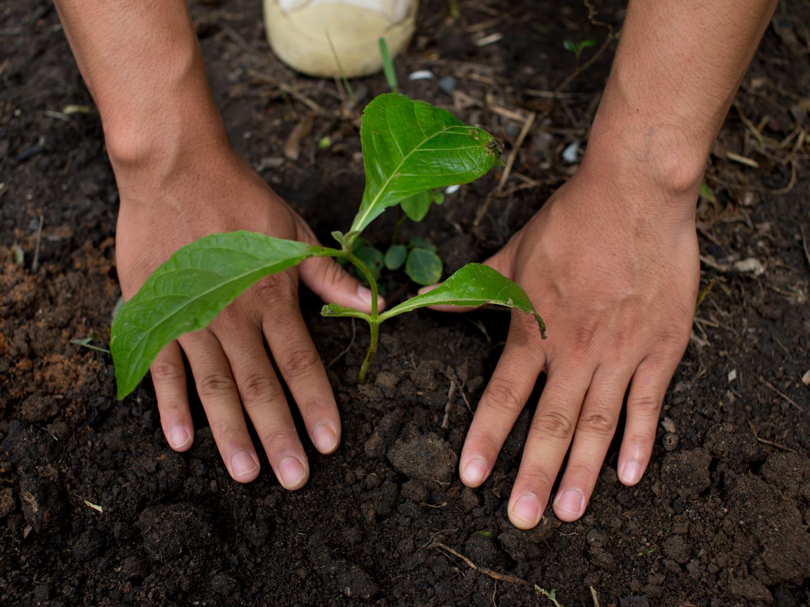 Wellers Tree Planting CSR day